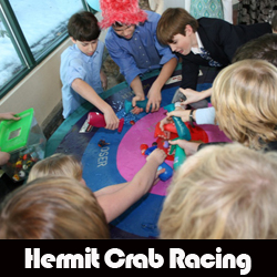 Hermit Crab Racing